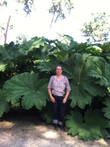 Gunnera spp. and me: for perspective,  I am 5' tall.