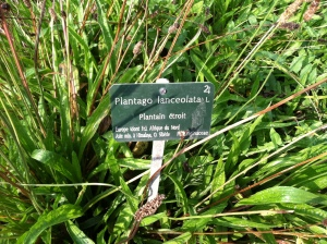 """weeds"" labeled and placed lovingly in a medicinal plants garden? be still my heart!"